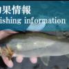 鮎 釣果情報